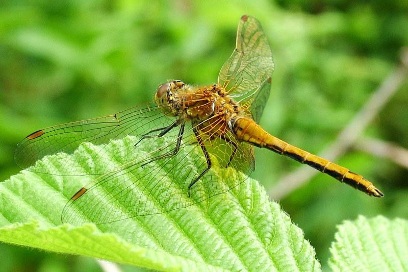 китаянок насекомые москвы фото и названия лишь одно кажется